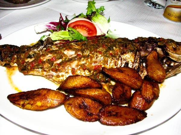 qqlounge-fish